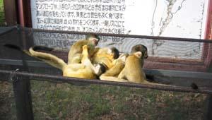 Ishigaki05
